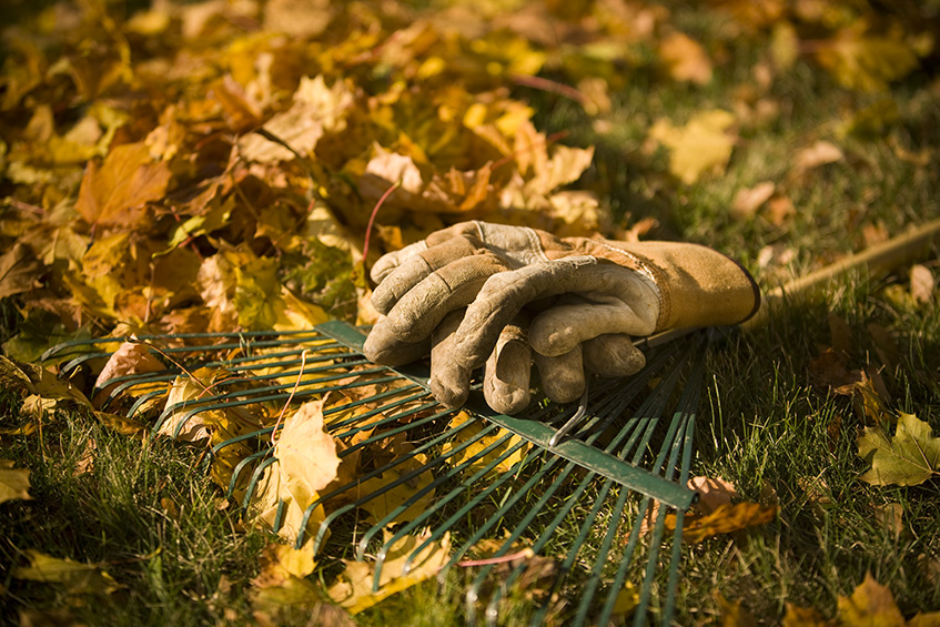 Fall_Gardening_leaves